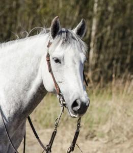 Ingrids häst - porträtt